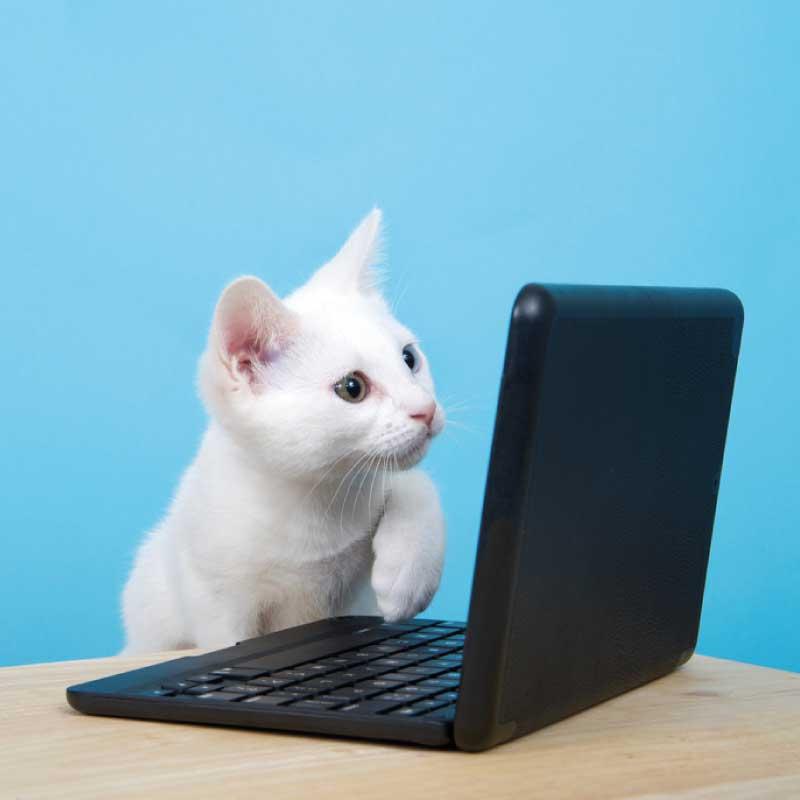 cat playing keyboard gif